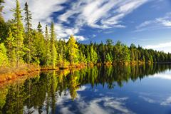 Forest reflecting in lake Stock Photos