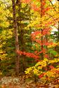 Stock Photo of fall forest background