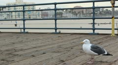 A seagull on a pier Stock Footage