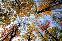 Treetops Stock Photos