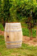 wine barrel at vineyard - stock photo