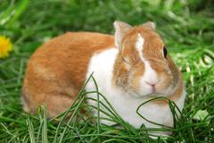 Winking bunny Stock Photos
