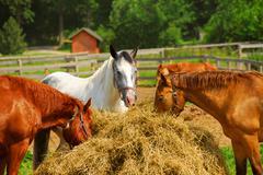 horses at the ranch - stock photo