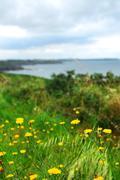 atlantic coastline in brittany, france - stock photo