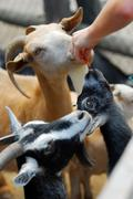 petting zoo - stock photo