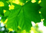 Stock Photo of green leaves background