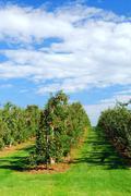 Omenatarhassa Kuvituskuvat