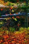fall forest and river - stock photo