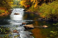 Forest river in the fall Stock Photos
