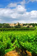 vineyard in french countryside - stock photo
