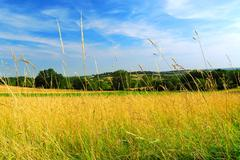 country meadow landscape - stock photo
