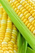 Stock Photo of corn close up