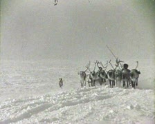Reindeer team. Newsreel of the USSR. Stock Footage