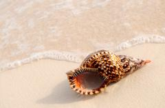 seashell and ocean wave - stock photo