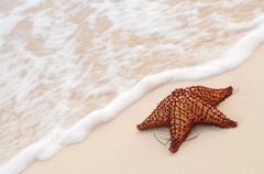Starfish and ocean wave Stock Photos