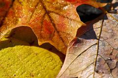 Stock Photo of autumn leaves macro
