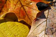Stock Photo of autumn leaves macro
