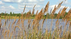 Reed on Lake Stock Footage