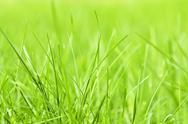 Stock Photo of green grass background