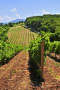 landscape with vineyard - stock photo