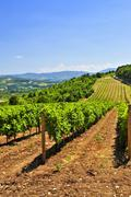 Stock Photo of landscape with vineyard