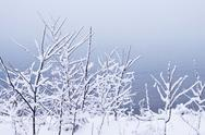 Stock Photo of snowy trees