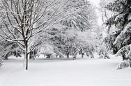 Stock Photo of winter park