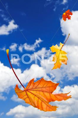 Stock photo of fall maple leaves background