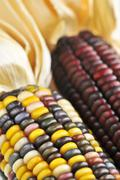 Stock Photo of indian corn
