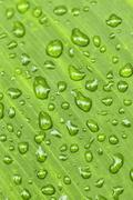 Green leaf background with raindrops Stock Photos