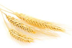 Stock Photo of isolated wheat ears