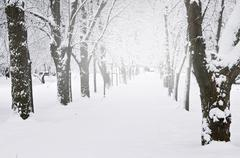 Lane in winter park Stock Photos