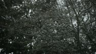 Stock Video Footage of Snowing in slow motion