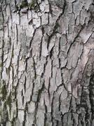 Stock Photo of bark texture