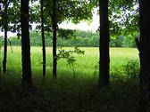 Quiet Forest Stock Photos