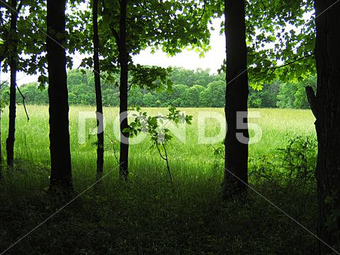 Stock photo of Quiet Forest