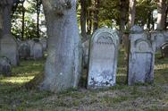 Stock Photo of old gravestones near tree trunk