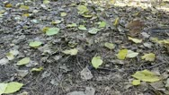 Stock Video Footage of leaves on the ground