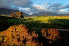 Vineyard landscape - stock photo