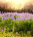 Stock Photo of meadow on alaska