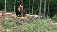 Lumbering tree cutting machine Stock Footage