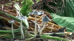 Little mushrooms colony Stock Footage