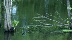 Fragments of trees in water - stock footage