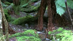 scenic water stream in tasmania rain forest - stock footage