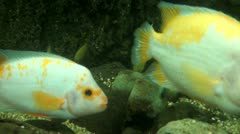 Fish, Sea Life, Animals, Nature Stock Footage
