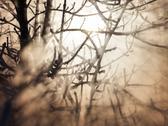 Frozen trees in sunlight Stock Photos