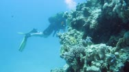 Stock Video Footage of Underwater
