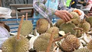 Stock Video Footage of Thai fruit durian prepared by a street vendor