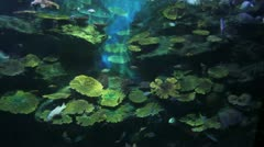 Colorful fish on a reef Stock Footage