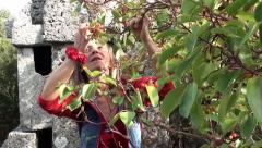 Woman eats red berry from a bush Stock Footage